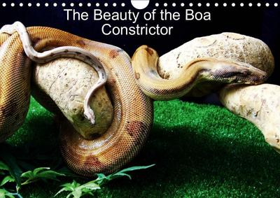 The Beauty of the Boa Constrictors (Wall Calendar 2019 DIN A4 Landscape)