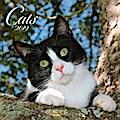 Cats 2019. Broschürenkalender
