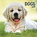 Dogs 2019. Broschürenkalender