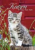 Katzen 2019 Kalender