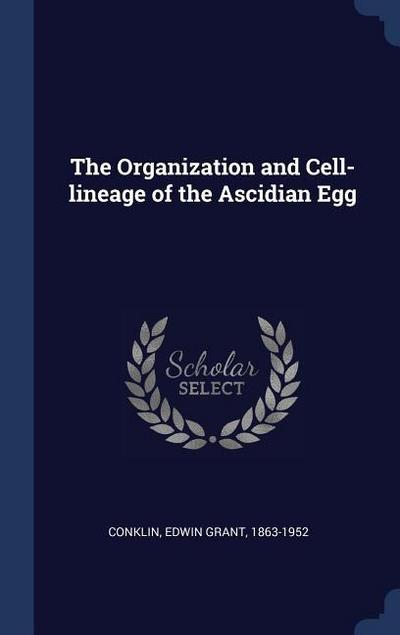The Organization and Cell-Lineage of the Ascidian Egg