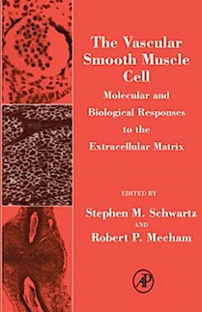 Vascular Smooth Muscle Cell