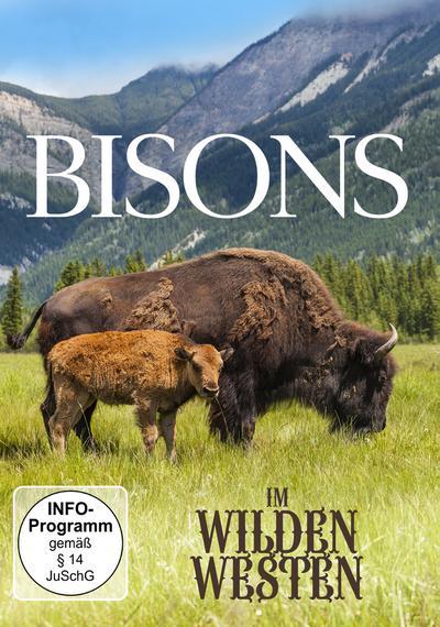 Bisons Im Wilden Westen