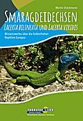 Smaragdeidechsen Lacerta bilineata und Lacert ...