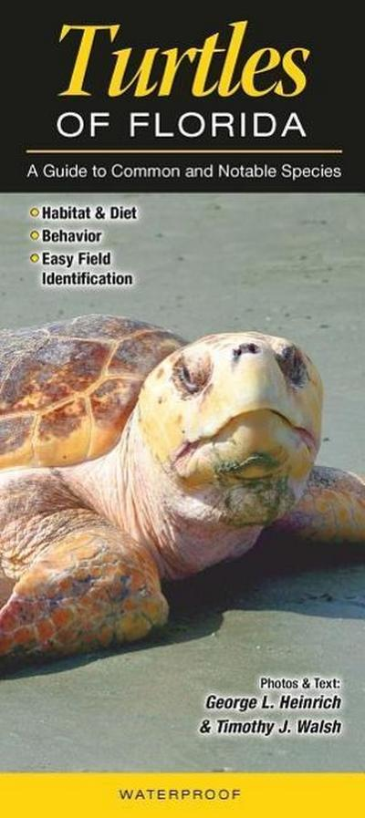 Turtles of Florida: A Guide to Common & Notable Species