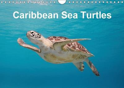 Caribbean Sea Turtles (Wall Calendar 2019 DIN A4 Landscape)