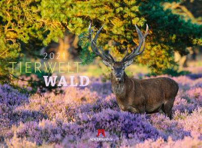 Tierwelt Wald 2021