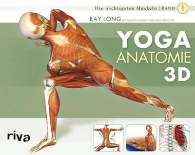 Yoga-Anatomie 3D