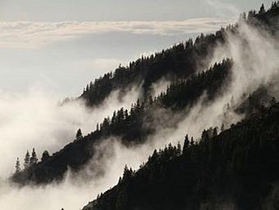 Nebel im Wald - 500 Teile (Puzzle)