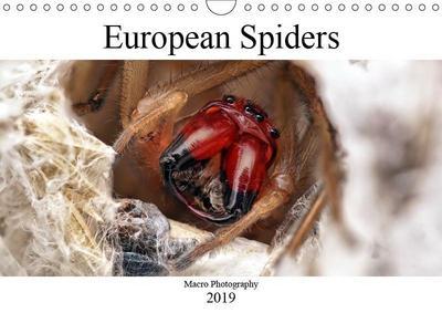 European Spiders (Wall Calendar 2019 DIN A4 Landscape)