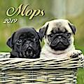 Mops 2019. Broschürenkalender