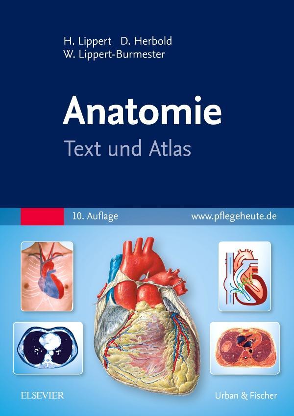 Anatomie Herbert Lippert