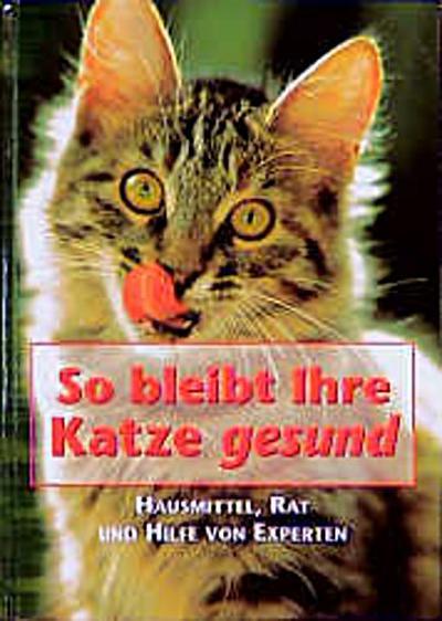 So bleibt Ihre Katze gesund