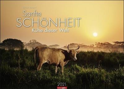Sanfte Schönheit - Kühe dieser Welt Kalender 2021: Sanfte Schönheit