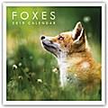 Foxes - Fuchs - Füchse 2019