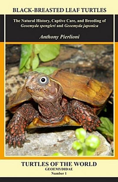 Black-breasted Leaf Turtles