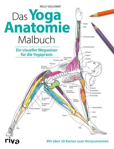 Das Yoga-Anatomie-Malbuch