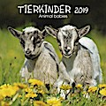 Tierkinder 2019. Broschürenkalender